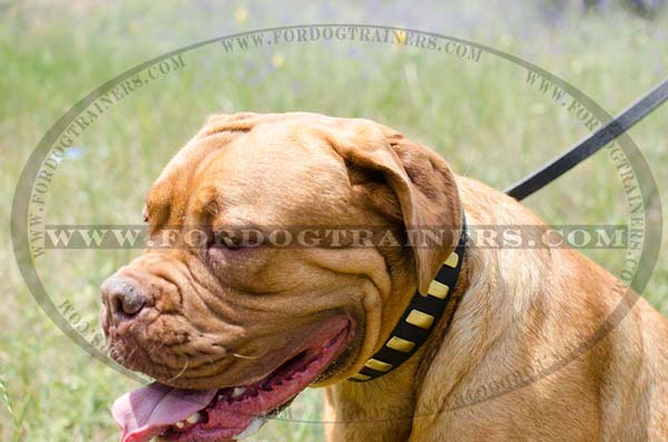 Walking Dogue De Bordeaux Collar Leather Designer Brass Plates