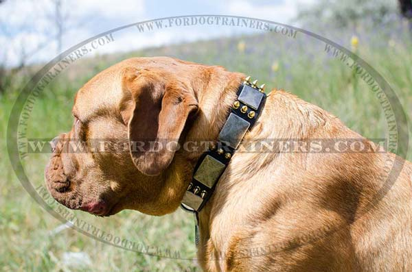 Dogue-De-Bordeaux Collar Leather with Plates and Spikes