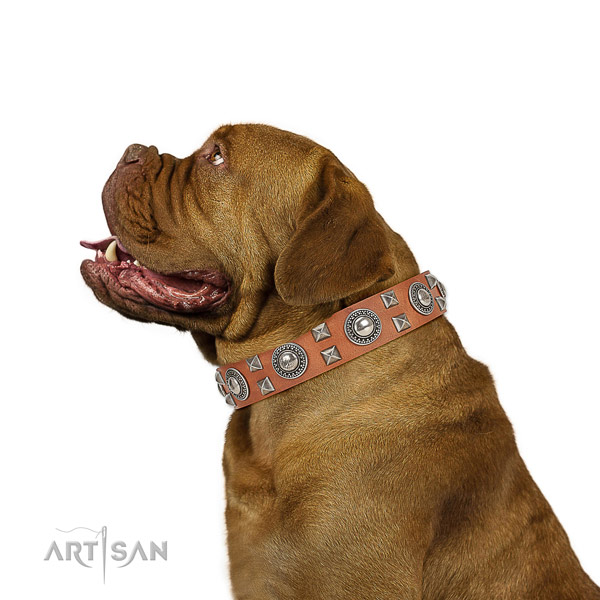 Extraordinary walking leather Dogue de Bordeaux collar with chic decorations