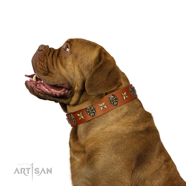 Awesome Dogue de Bordeaux Artisan leather collar for comfortable wear