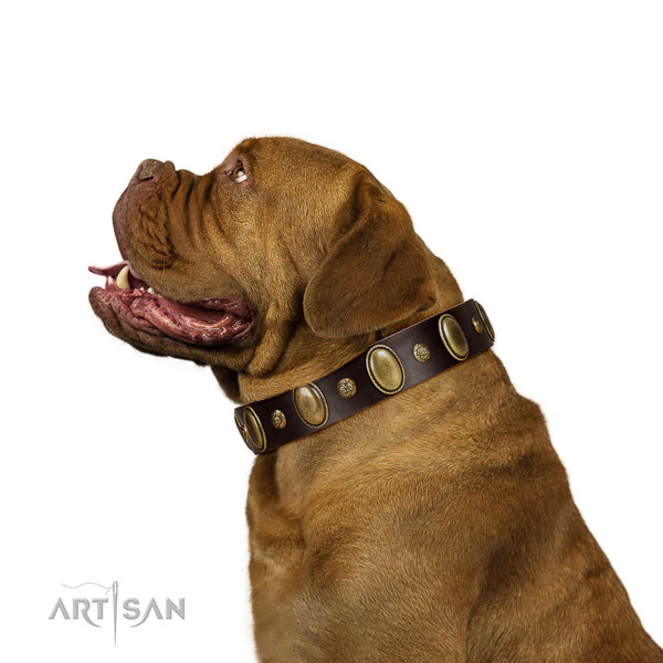 Comfortable Wearing Dogue de Bordeaux Collar of Awesome Quality Leather