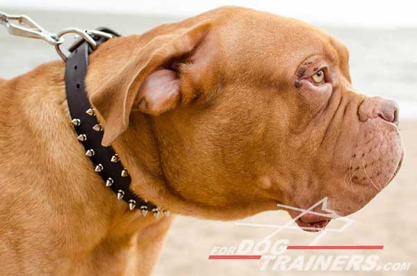 Designer Leather Dogue de Bordeaux Collar