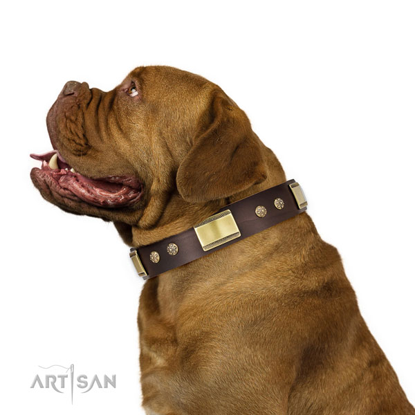 Dogue de Bordeaux everyday use dog collar of exceptional quality natural leather