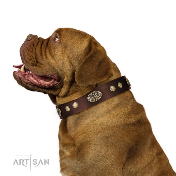 Dogue de Bordeaux everyday use dog collar of comfortable leather