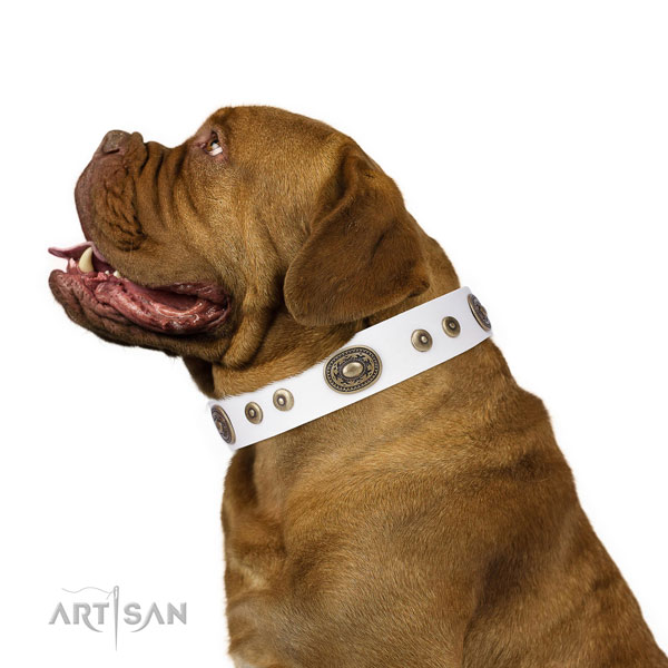 Dogue de Bordeaux stylish design full grain natural leather dog collar with decorations