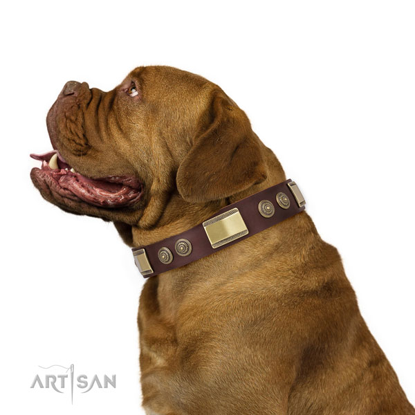 Dogue de Bordeaux comfortable wearing dog collar of exquisite quality natural leather