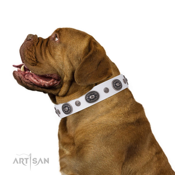 Dogue de Bordeaux top quality full grain natural leather dog collar with embellishments