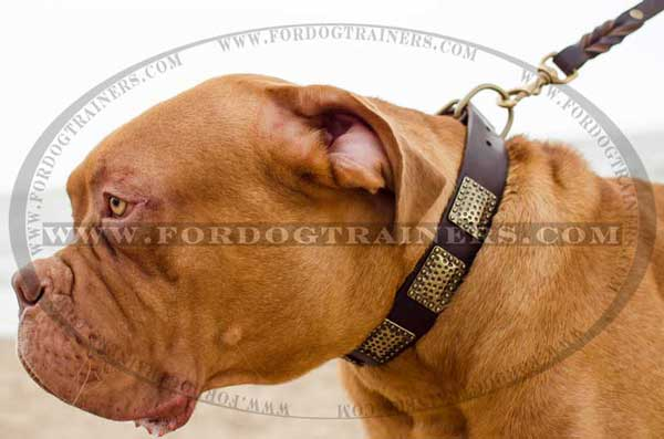 Decorated Dogue-de-Bordeaux collar