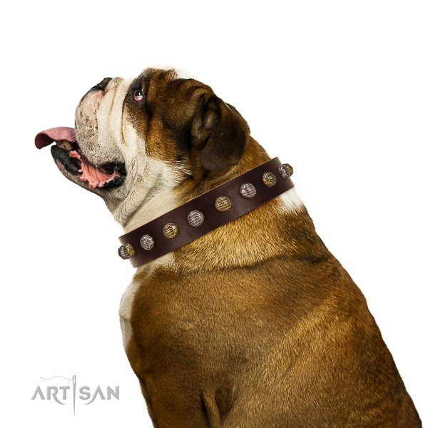 Natural Leather English Bulldog Collar with Incredible Adornments