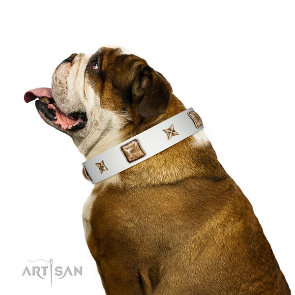 Premium quality English Bulldog Artisan leather collar