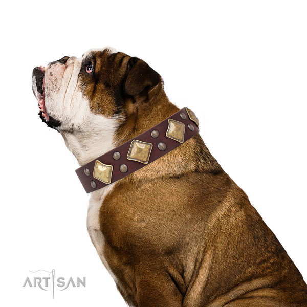 English Bulldog trendy genuine leather dog collar with decorations
