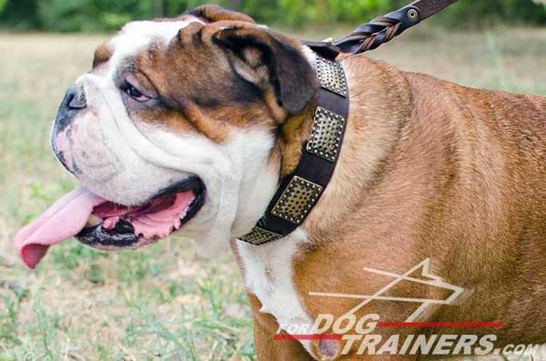 English Bulldog leather collar in Vintage Style