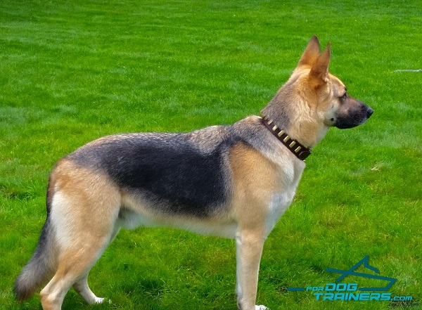 New Design Best Collar for German Shepherd