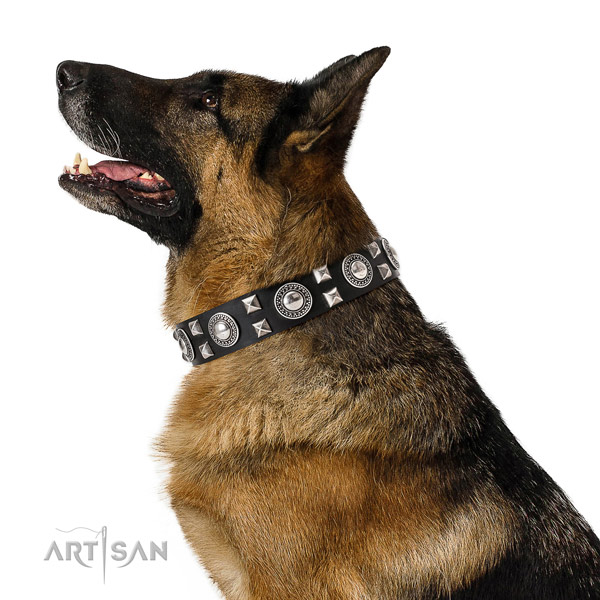 Extraordinary walking leather German Shepherd collar with chic decorations