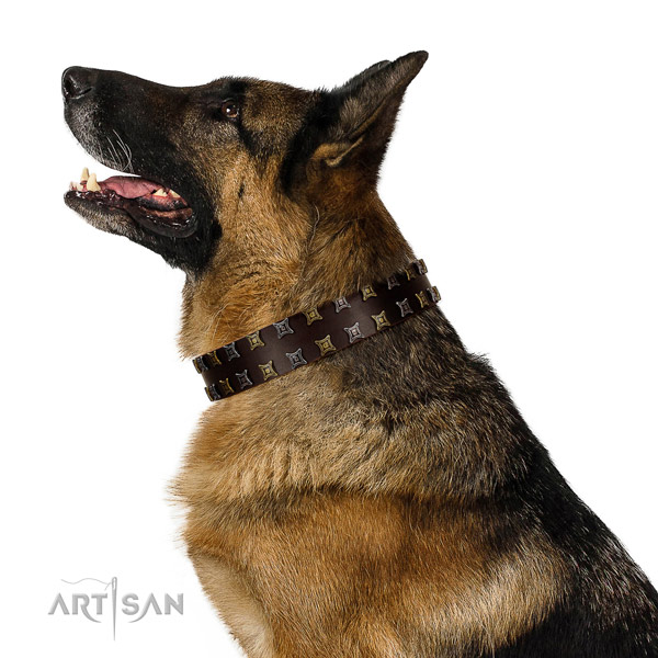 German Shepherd brown leather dog collar for daily activities