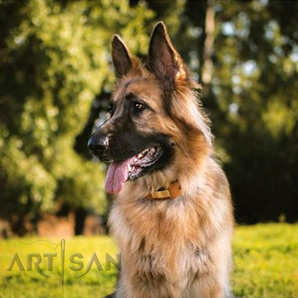Akela Looks and Feels incredible with FDT Artisan German Shepherd Collar on