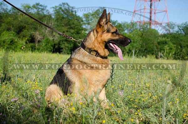 Wide Leather German Shepherd Collar