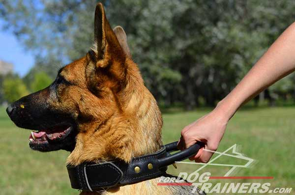 Leather German Shepherd Collar Durable Comfy Handle