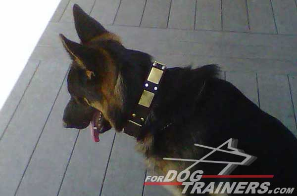 German Shepherd Decorated Collar Leather Nickel Pyramids