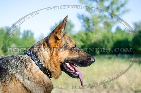 German Shepherd Collar Stylish Walking Dog Supply