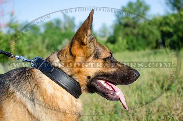 Unique German Shepherd Collar Leather Adjustable
