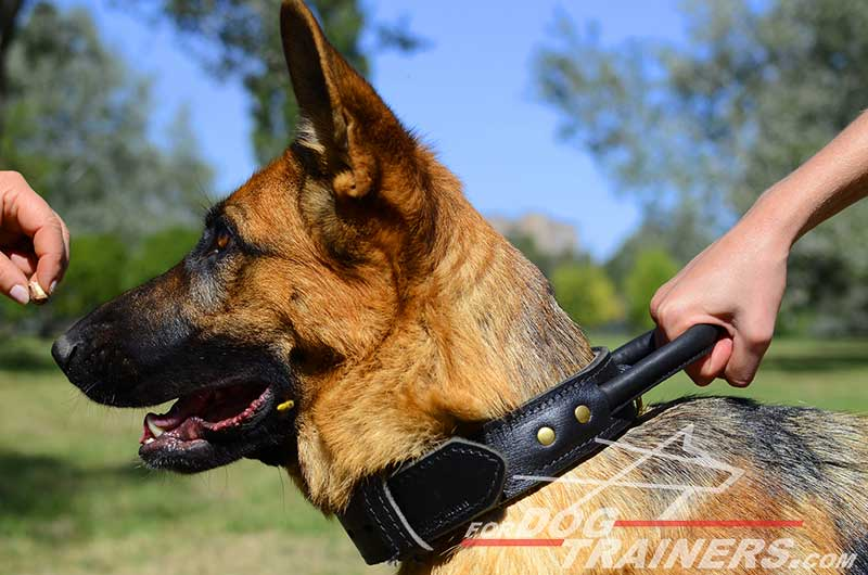 german shepherd protection training take german shepherd dog agitation collar with handle and