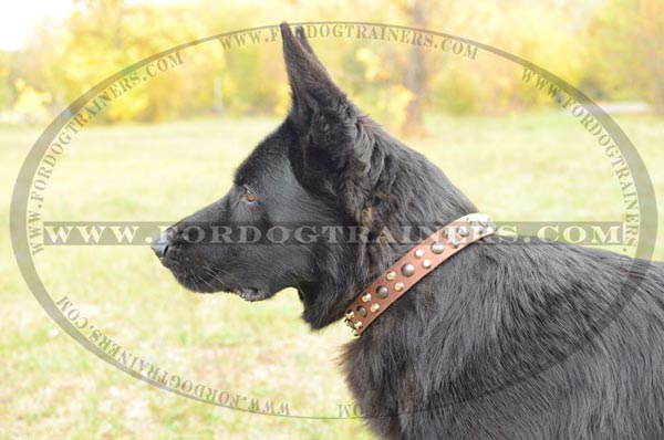 Leather German Shepherd Collar with studs