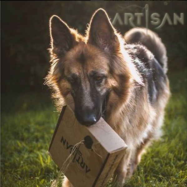 Tan German Shepherd Collar Packed in Special Gift Box