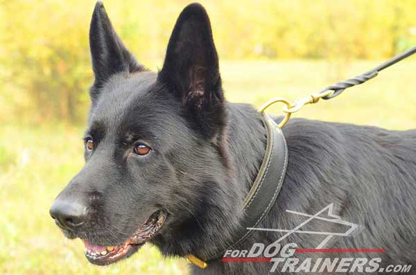 German Shepherd Leather Collar Training Dog Supply