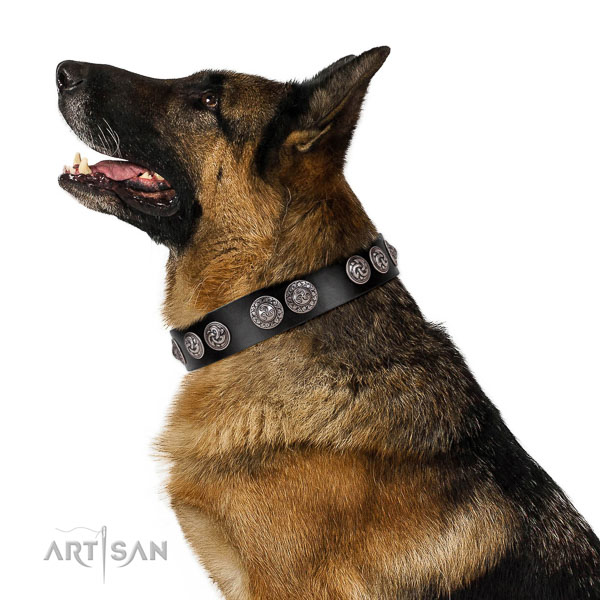 Extraordinary walking black leather German Shepherd