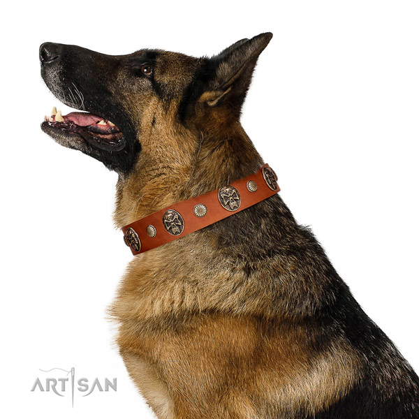 Antique Leather Dog Collar for Stylis German Shepherds