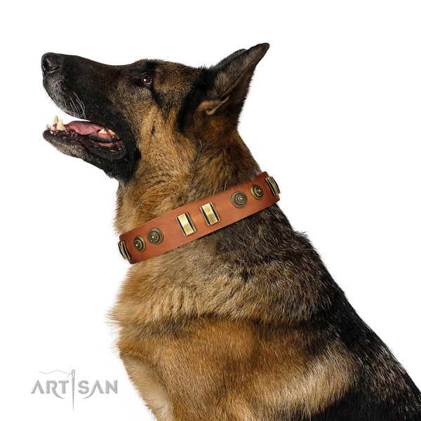 German Shepherd comfy wearing dog collar of awesome quality natural leather
