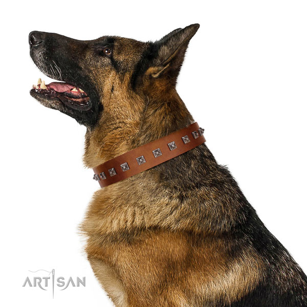 Safe Leather Dog Collar Matches German Shepherd Perfectly