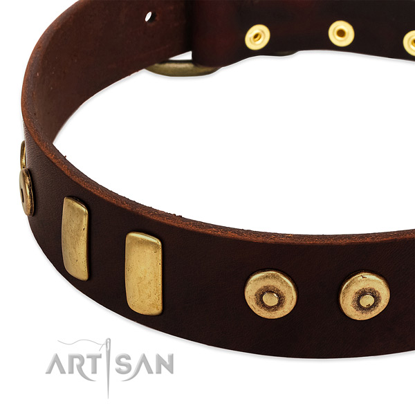 Brown dog collar with large plates and dotted studs