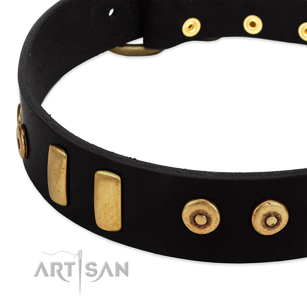 Black dog collar with large plates and dotted studs
