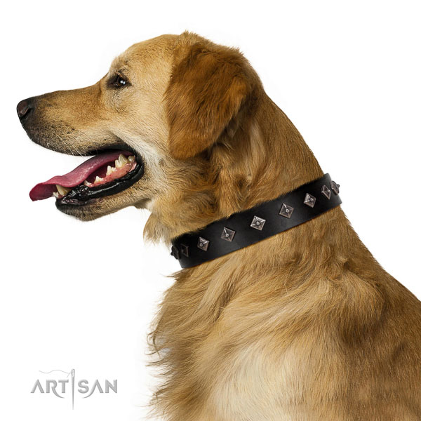 New elegant walking black leather Golden Retriever collar