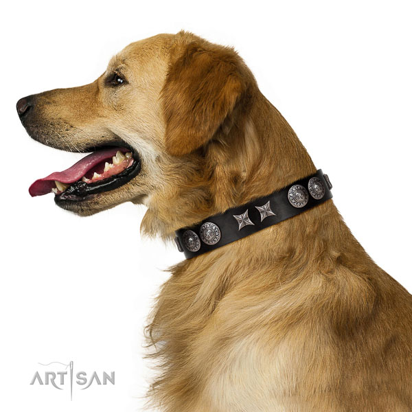 Extraordinary walking black leather Golden Retriever