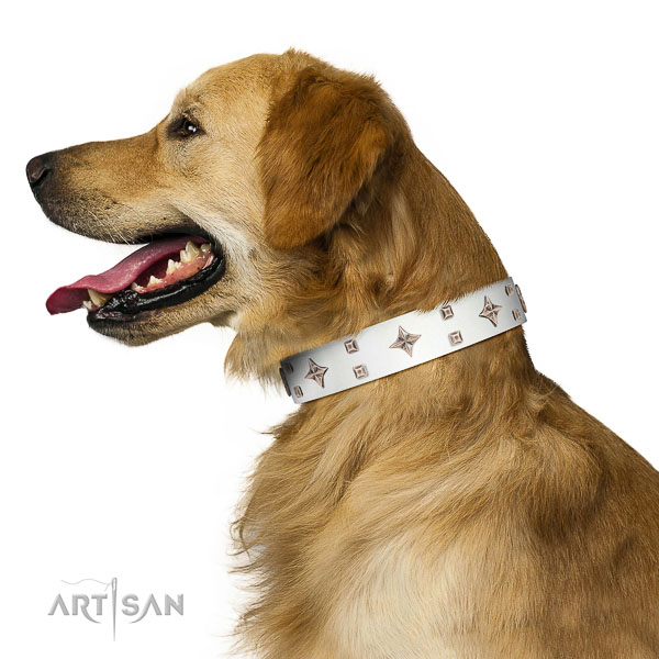 Gorgeous leather Golden Retriever collar for better