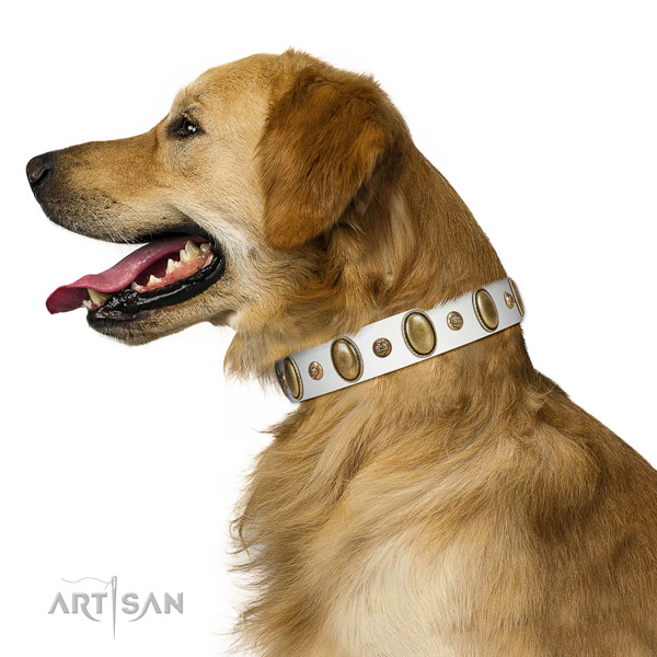 Comfortable Golden Retriever Artisan leather collar of optimal width
