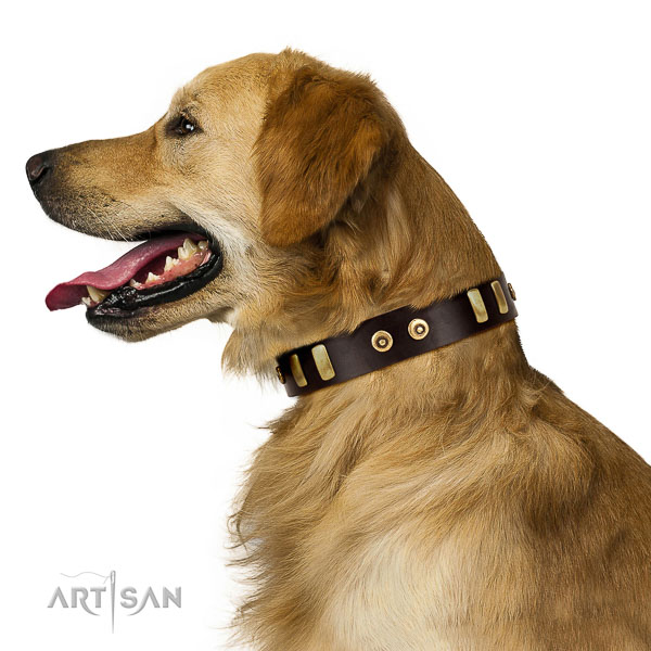 Extraordinary walking brown leather Golden Retriever