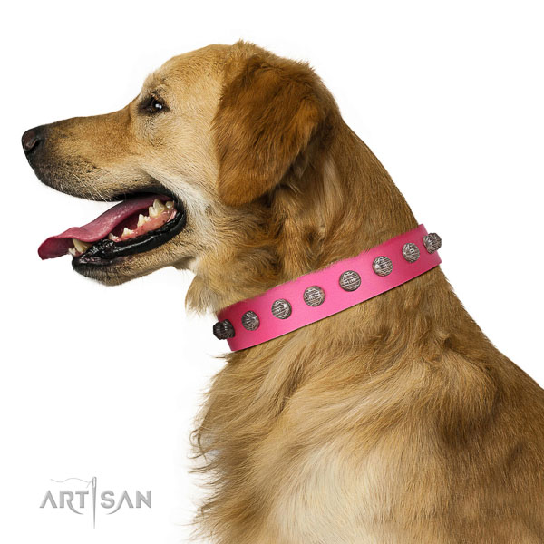 Extraordinary walking pink leather Golden Retriever
