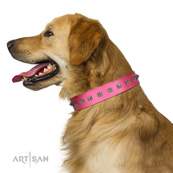 Extraordinary walking pink leather Golden Retriever collar with chic decorations