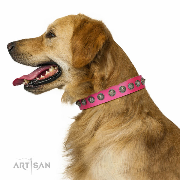 Decorated leather Golden Retriever collar for comfortable walking