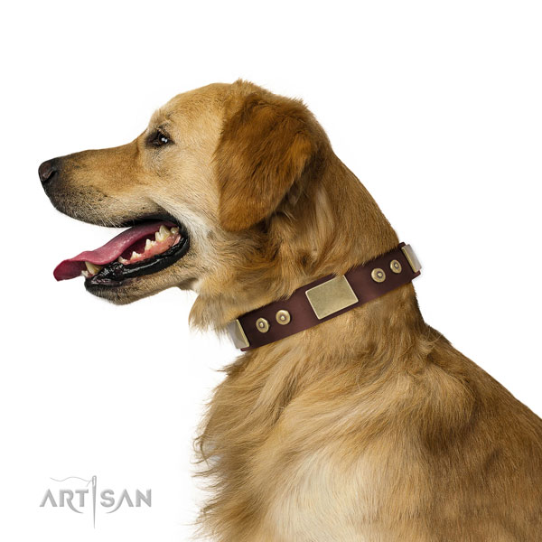 Golden Retriever daily use dog collar of comfortable natural leather