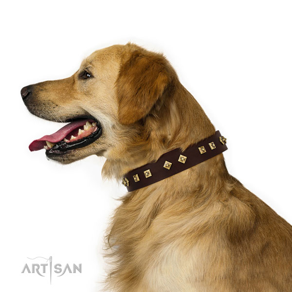 Golden Retriever walking dog collar of trendy natural leather