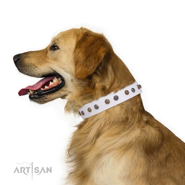 Golden Retriever top notch full grain genuine leather dog collar with studs