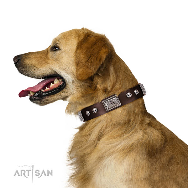 Golden Retriever basic training dog collar of best quality leather