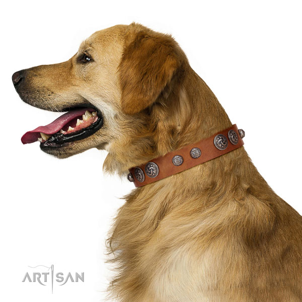 Fashionable Design Golden Retriever Collar of  Genuine Leather