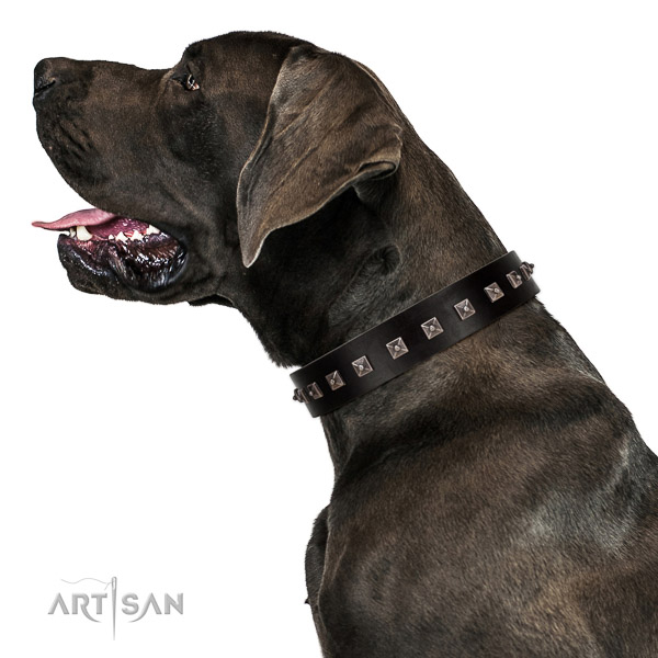 Extraordinary walking black leather Great Dane collar with chic decorations