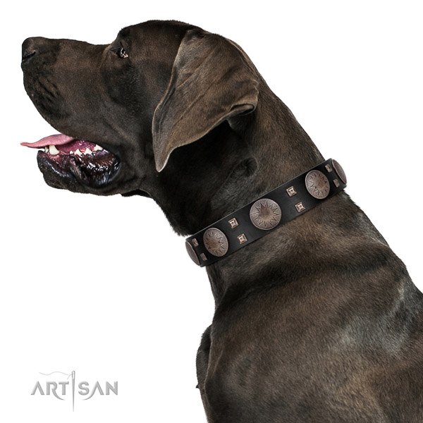 Extraordinary walking leather Great Dane
